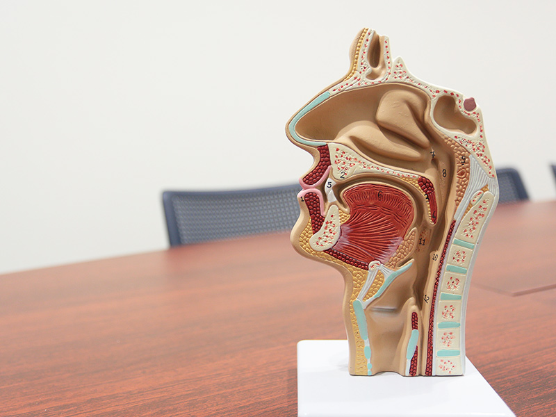 口腔機能の維持や回復をサポート
